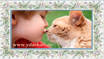 кошки лечпт