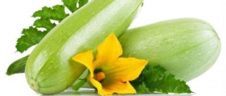 green zucchini with flowers