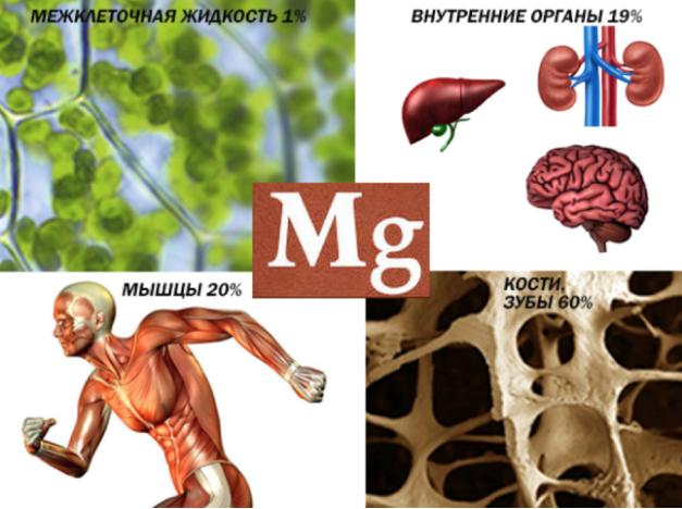 Mg-v-organizme- dlja-chego-nuzen
