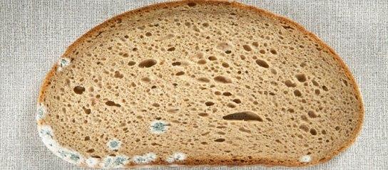 mozno-li-est-hleb-s-plesenju