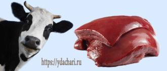 pechen-govyazhya-polza-i-vred