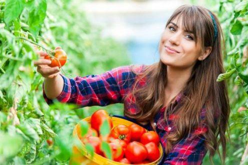 devushka-sobiraet-tomati